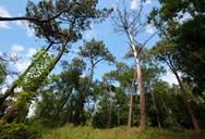 Visite guidée - La Forêt du Touquet au fil des saisons