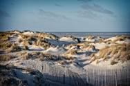 Visite guidée - L'Estuaire de la Canche et ses Dunes