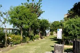 Le Jardin Conservatoire des Plantes Tinctoriales