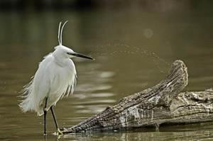 Les oiseaux du marais du Cougourlier