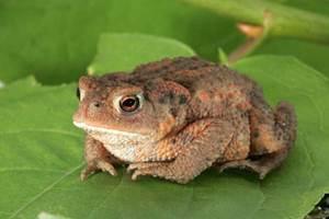 A la découverte des Amphibiens
