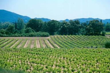 Cave des vignerons des 4 chemins