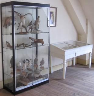 Salle Histoire Naturelle