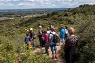 La forêt méditérranéenne: découvrir ce milieu naturel et les enjeux de sa gestion