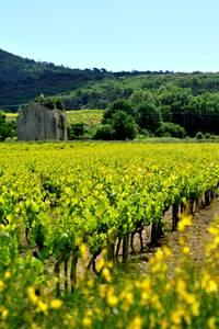Balade vigne et vin à Laval Saint Roman