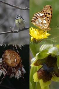 ABC - Balade naturelle avec Parfum d'Aigoual