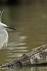 """RDV Nature """"Les Oiseaux du Marais du Cougourlier"""""""