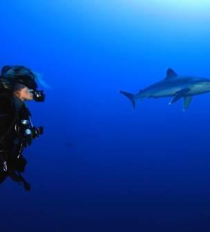 Amedee Diving Club