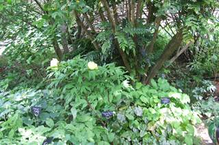 Les Jardins potagers du Temple