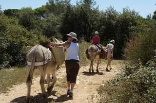 Les ânes du mas bamboche