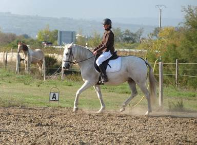 L'Equus Caballus