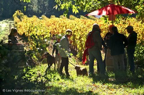 VigVignes Réboussières © Vignes Réboussières