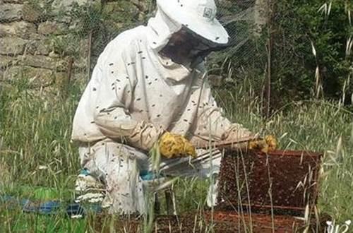 Le grenier aux abeilles Mejannes Les Ales ©