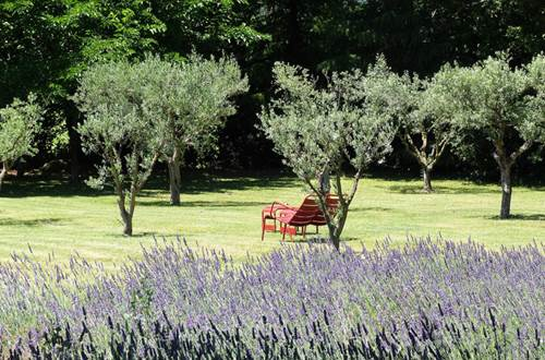 Domaine de Fos - oliviers © Domaine de Fos