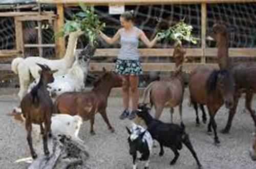 Jardin animalier de Mialet ©