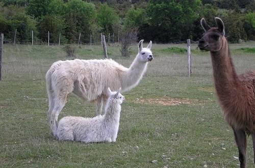Causses et Lamas 4 ©