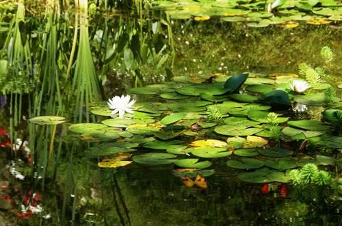 Jardins de la Fontaine - Bassin ©