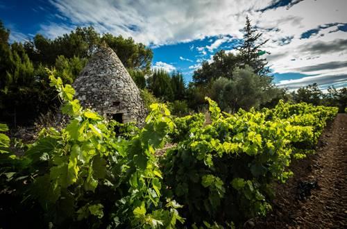 Capitelle en bordure de vigne © 2017-Hervé Leclair Asphéries-Sud de France Développement